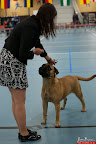 20130510-Bullmastiff-Worldcup-0506.jpg