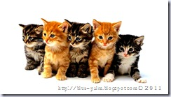 cat-kitten-kitty-pussy-cute-sweet-picture-photo-