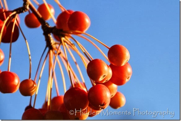 Fall Berries 2
