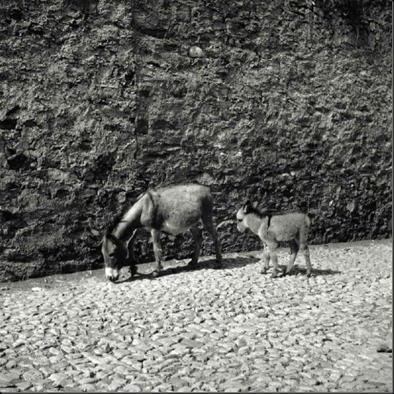 © Ugo Pellis-Museo delle Culture, Lugano, Switzerland. - Asina e asinello - Meana Sardo . 6 Giugno 1934
