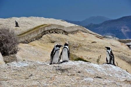 Pinguini langa Cape Town.jpg