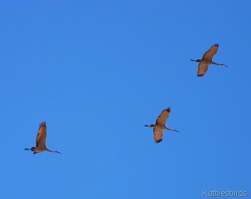 14. cranes-kab
