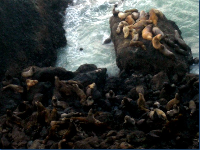 Sea lions (7)