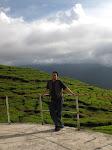 Tea Garden (PTPN VI Solok)