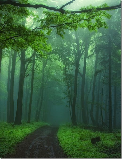 green_misty_forest_and_road