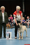 20130510-Bullmastiff-Worldcup-1074.jpg