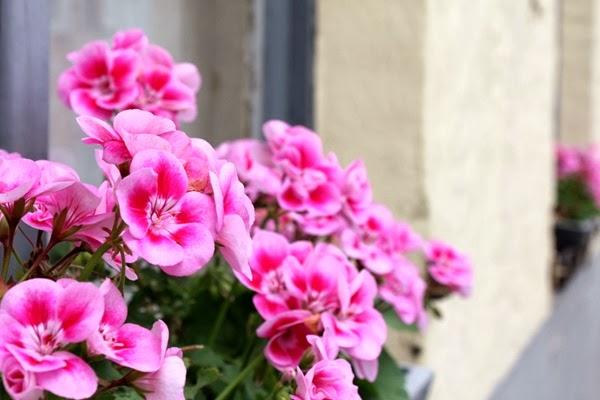 blomst & hus