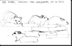 October 21, 2012 Rock Hyrax sketch