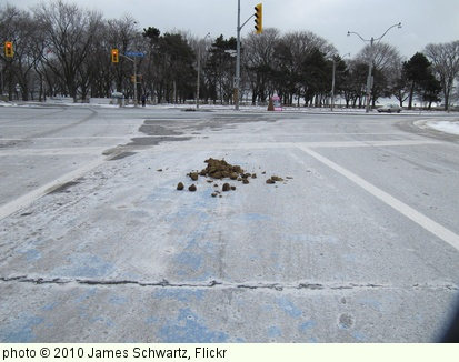 'Bike Path Manure' photo (c) 2010, James Schwartz - license: http://creativecommons.org/licenses/by-nd/2.0/