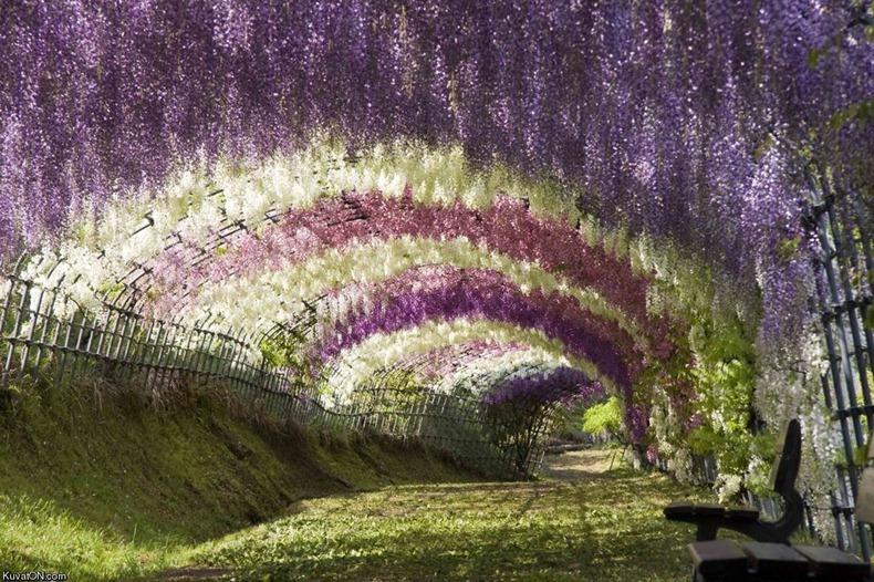 ashikaga-flower-park-10