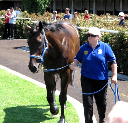 black caviar_walking ring3