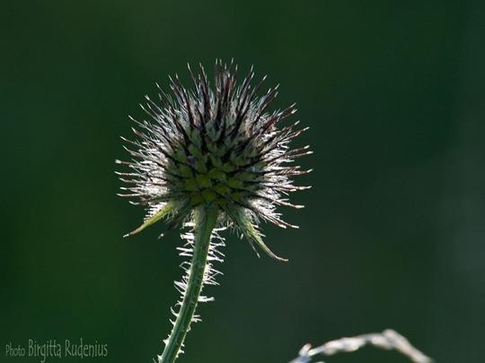 blom_20110802_macro1