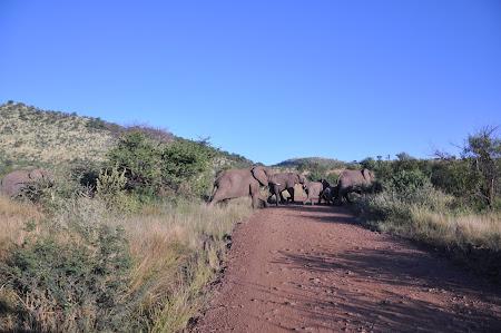 6. Safari Africa de sud.JPG