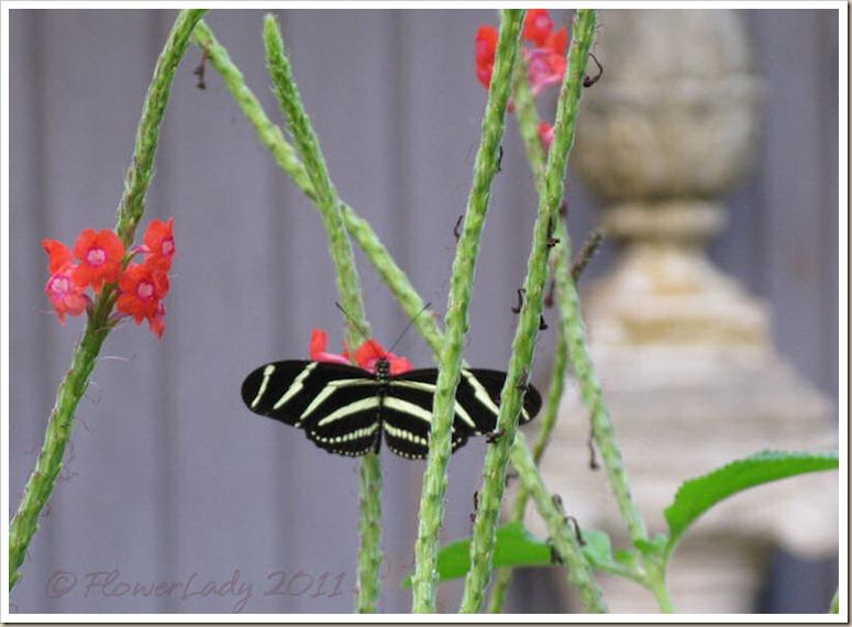 12-22-zebra2