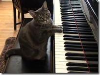 gato pianista blogdeimagenes (38)