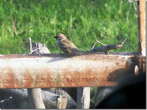 Birdmotel05-13-13e