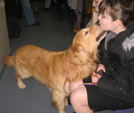 Golden Retriever offers a smooch to her handler.