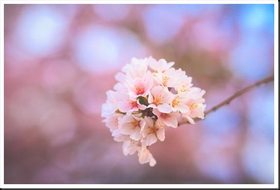 Spring 0413-0019
