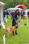 20100513-Bullmastiff-Clubmatch_30899.jpg