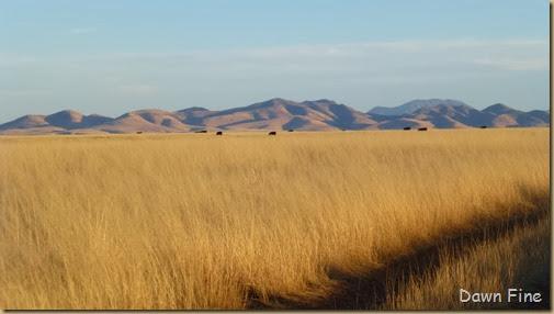 San Rafael Grasslands_020