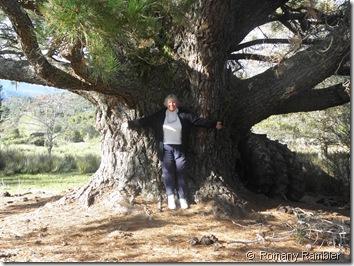 Jenny with Large Pine @ Seddonvale Memorial Gates