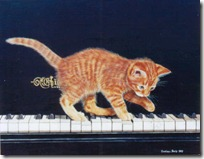 gato pianista blogdeimagenes (15)