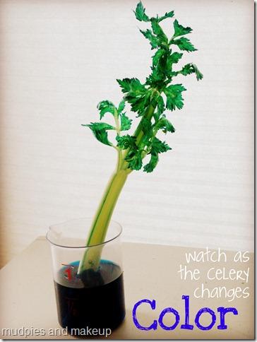 celeryexperiment3