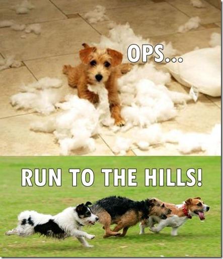 0-86073800-1328635992-crazy-dogs-70-jpg