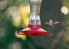 Kleb Woods Hummingbird 2