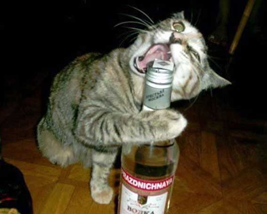 Can-cat-drink-alcohol-01