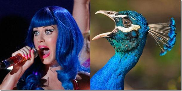 pop-stars-birds-2