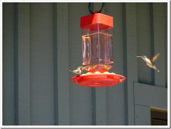 Huming Bird