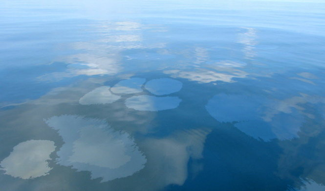 Oil bubbles to the surface of the Gulf of Mexico within one mile northeast of BP's Macondo well on 23 August 2011. Jeff Dute / Press-Register