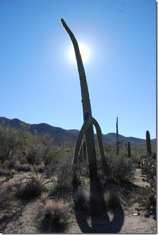 01-02-12 Saguaro National Park - West 034