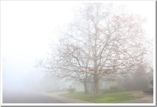 121211_fog_47