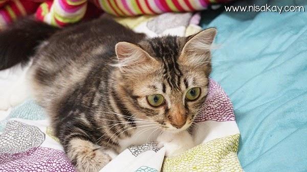 Kucing Nisakay 5