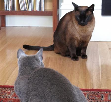 cats_standoff_dec13