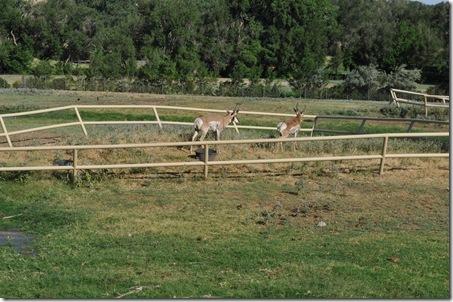 07-11-11 zoo 20
