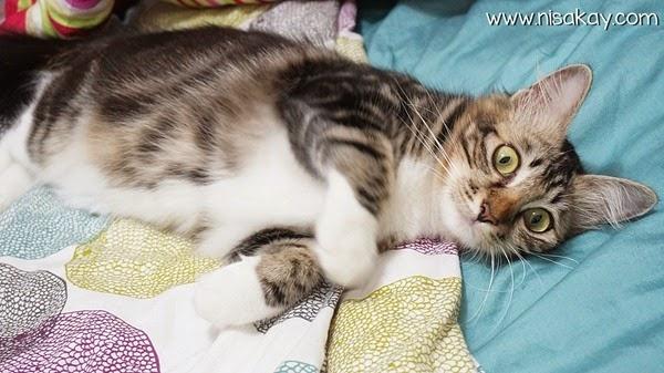 Kucing Nisakay 1