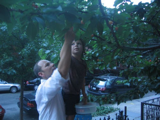 Fernando and Leo picking fruit.