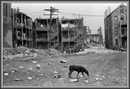 Tenement-Dog-Marc-PoKempner