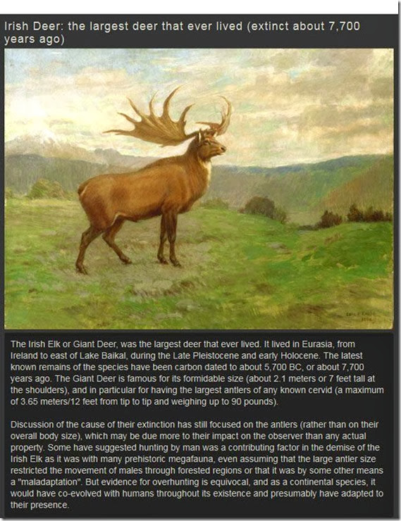 extinct-animals-005