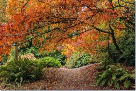autumn-colors-fall-025
