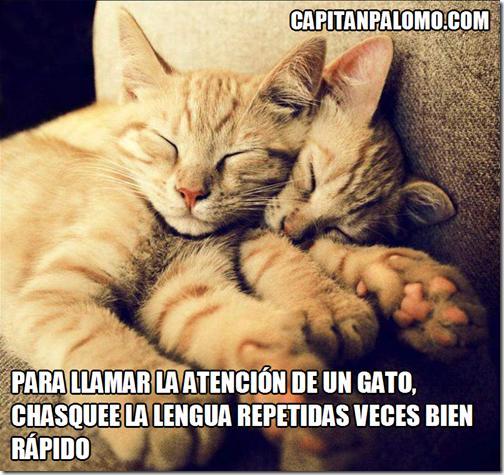 Para llamar la atención de un gato