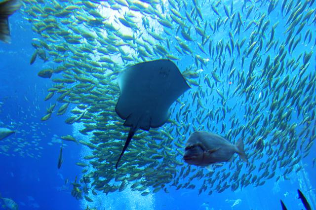 akvarium dubai