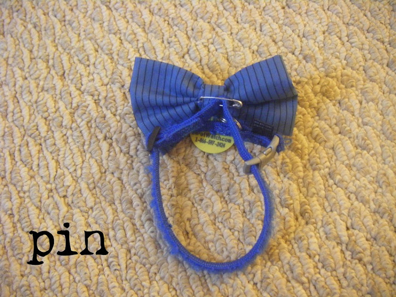 Bow Tie Cat Collar | allonsykimberly.com