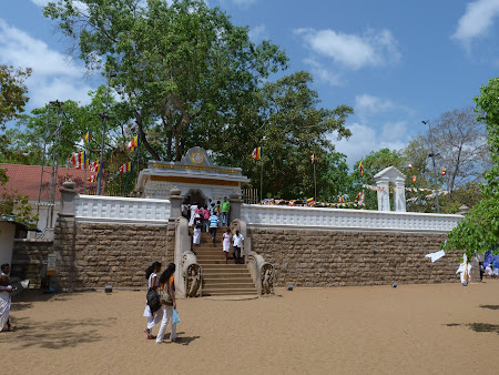 Locuri sfinte Sri Lanka: pomul lui Buda