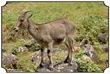 MNR_320_DSC0124_www.keralapix.com