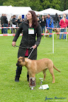 20100513-Bullmastiff-Clubmatch_30967.jpg
