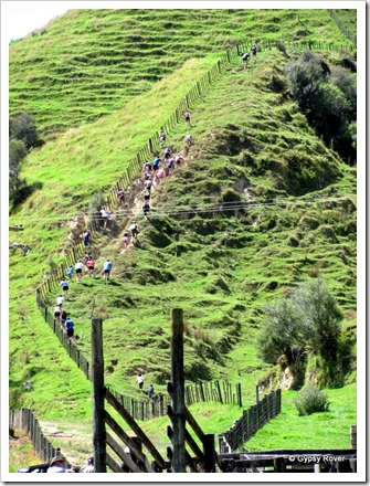 Whangamomona Republic Day. Gut Buster marathon. Up the fence line to the top.